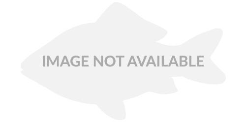 White Channel Catfish